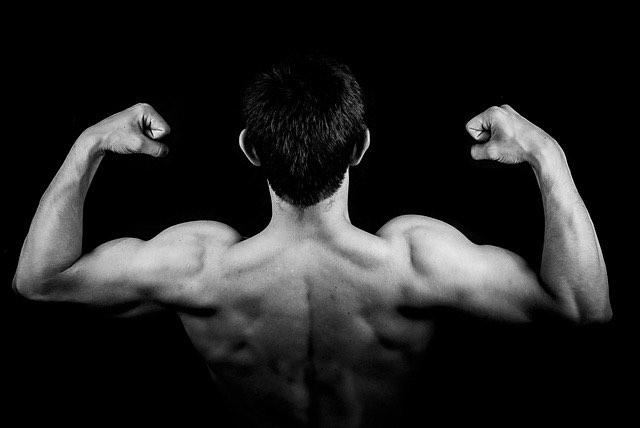 les différents muscles de notre corps